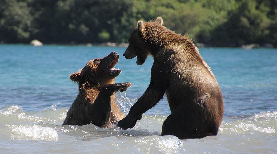 Kamtschatka Bärenreich