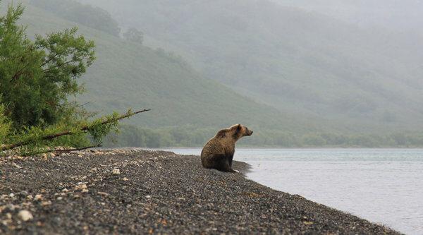 Kamtschatka Bär am See