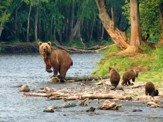Kamtschatka Reich der Bären Slider