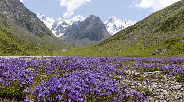 Pflanzenwelt Gebirge Kirgistan