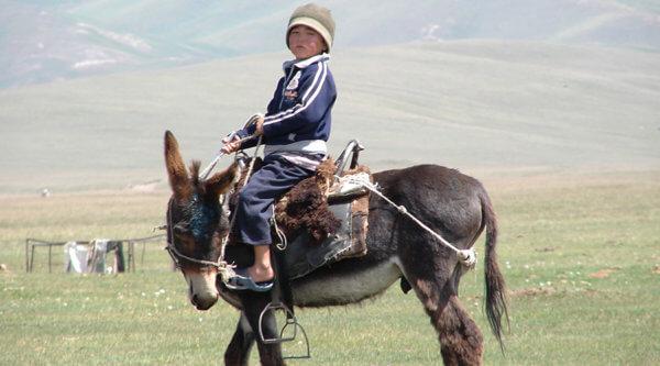 Junge auf Esel Kirgistan
