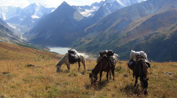 Pferde im Altei-Gebirge