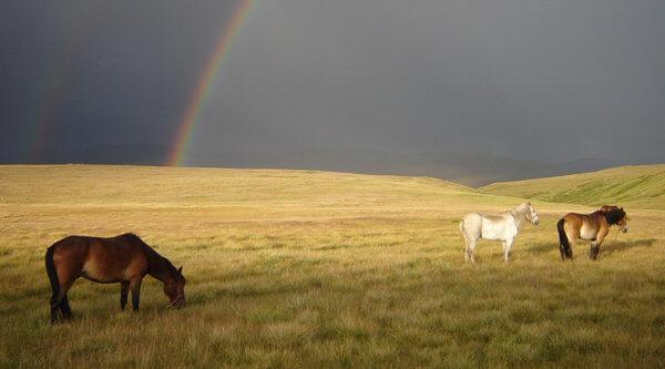 Regenbogen im Alteigebirge