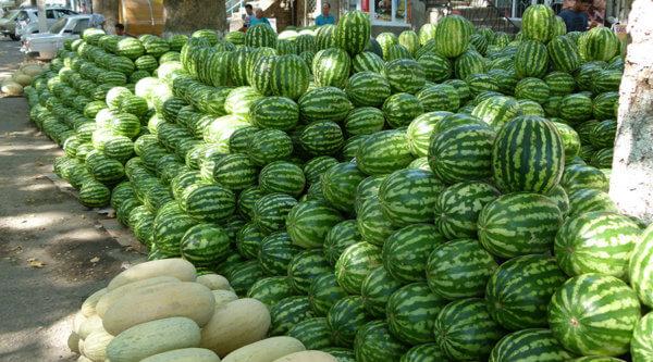 Melonenlager Usbekistan