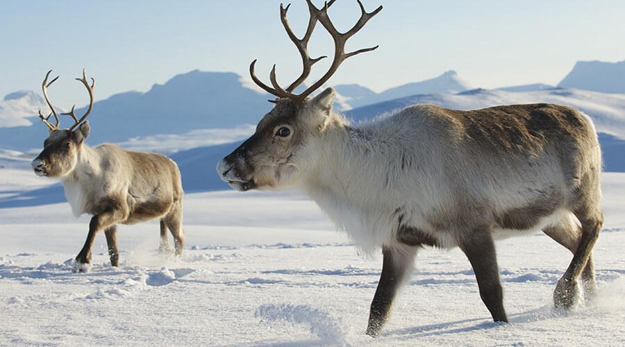 Tierwelt Baikalsee