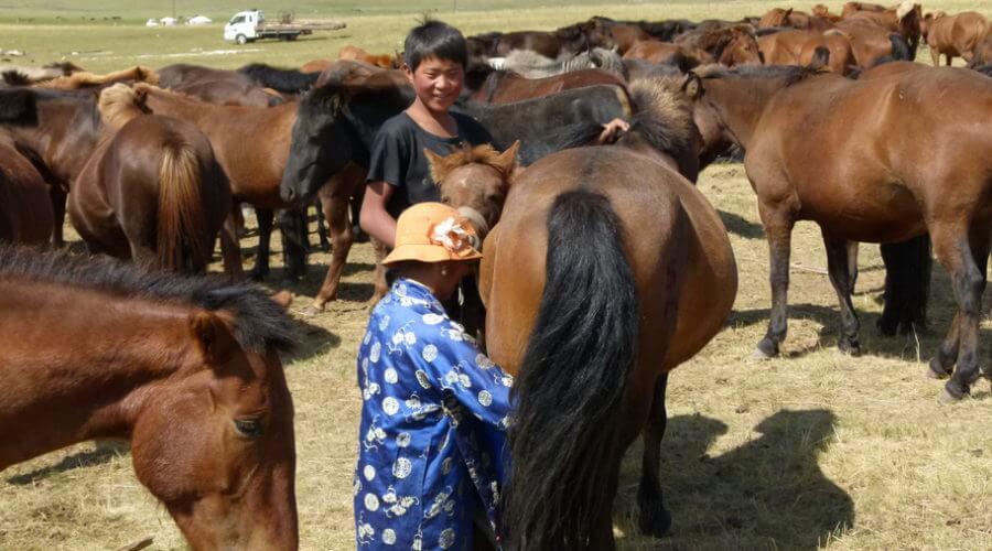 Pferde melken