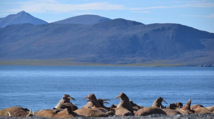 Warosse am Ufer der Beringsee
